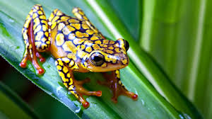 wallpapers frogs free frog d for 1920x1080 100614 frogs