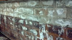 White Mold In Basement Dangerous by How To Clean Mold In Basement Regarding White Mold Basement 12278