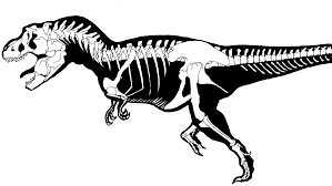 skeleton coloring nice t rex skeleton drawing 30 mosatt