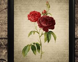rose wall art etsy