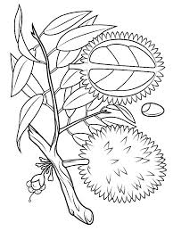 durian coloring pages download and print durian coloring pages