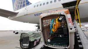 United Air Baggage 29 Pets Died On U S Commercial Flights Through October Dot Says