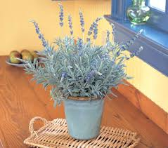 Plant For Bedroom 5 Plants For Your Bedroom To Help You Sleep Better The Unbounded