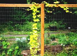 garden fencing ideas do yourself video and photos