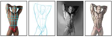 how to draw and shade the human torso proko