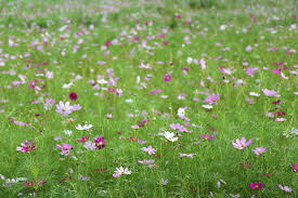 free images landscape nature field lawn meadow prairie