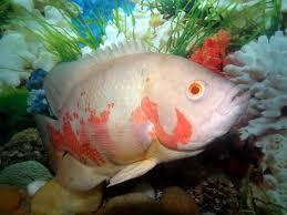 40 best aquarium ideas images on pinterest aquarium ideas fish