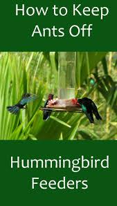 How To Keep Birds Off Your Patio by 25 Beautiful Hummingbird Garden Ideas On Pinterest Hummingbird