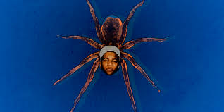 we had arachnologists fact check lil b u0027s tweets about spiders