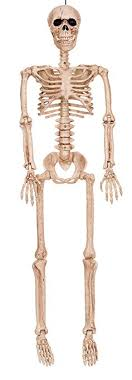 posable skeleton bonez posable skeleton decoration 36 toys