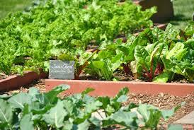 the white house kitchen garden feeding the homeless u0026 inspiring