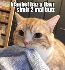 Nom Nom Nom Meme - nom nom nom lolcats lol cat memes funny cats funny cat