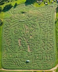 Denver Botanic Gardens Corn Maze Aerial Of Corn Maze In Denver Botanic Gardens Denver Usa