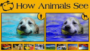 Are Dogs And Cats Color Blind 10 Examples Of How Animals See Images That Show Us The World
