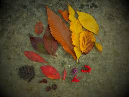 free images tree nature plant texture fall flower foliage