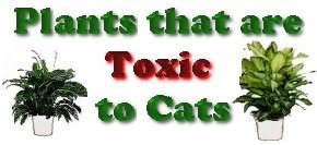 sophisticated house plants toxic to cats images best image