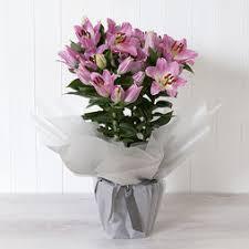 Lily Plant Shop Flowers U0026 Plants At Mailshop Co Uk