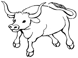 bull coloring pages printable realistic bebo pandco