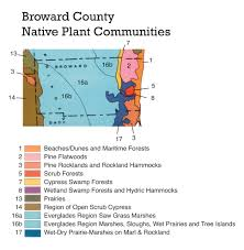 florida native plants list about the plant communities map florida association of native