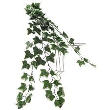 thick trailing ivy pick vine bunch for trellis hanging baskets ebay