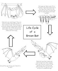 bat resources life cycles
