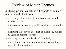 Human Anatomy And Physiology Review Chapter 1 Major Themes Of Anatomy U0026 Physiology Ppt Video Online