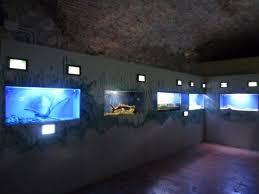 vasche acquario vasche dell acquario foto di acquario di bolsena bolsena