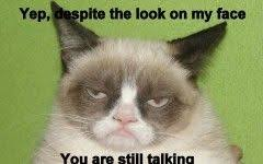 Angry Meme Cat - 299 best angry cat meme images on pinterest angry cat spanish