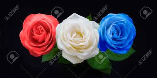 white and blue roses symbolic white and blue roses three heads in white