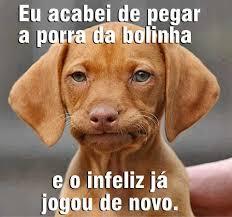 Tenso Meme - dog tenso meme by fagnercarvalhoo memedroid