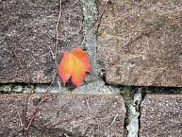 short story analysis the last leaf by o henry the sitting bee