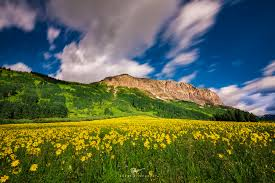 crested butte wildflowers in july ah yes crested butte mo flickr