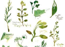herbe cuisine guide rapide pour cultiver vos plantes aromatiques guide plantes