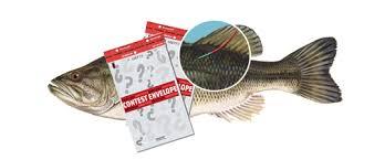 lucky envelopes tagged fish lucky envelopes neighborhood marketing