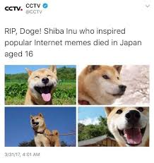 Doge Meme Images - could the actual doge dying revalue doge meme temporarily due to