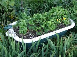 Bathtub Planter Unique Container Gardening Ideas U2014 Todd Haiman Landscape Design