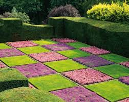 creeping thyme seeds ground cover fragrant zones 4 to 9