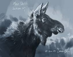 here u0027s a new digital sketch done of a moose cow i observed in