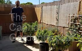 smoking weed in backyard the cannabis gardener grow your own backyard cannabis cheap and