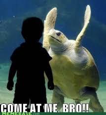 Come At Me Meme - turtle come at me bro funny animals funnypicturegallery com
