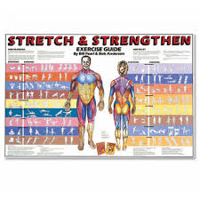 stretch and strengthen laminated chart 5009l stretching poster