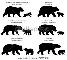 bear stock images royalty free images u0026 vectors shutterstock