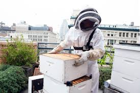learning to farm your own artisanal honey on the rooftops of new york