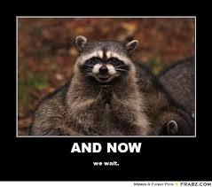 Funny Raccoon Meme - fancy 30 raccoon memes testing testing