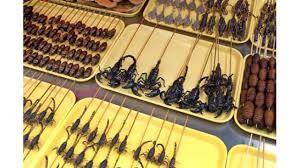insecte cuisine il va falloir manger des insectes limoges magasins bio limoges