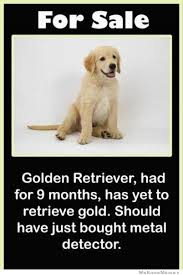 Golden Retriever Meme - for sale golden retriever weknowmemes