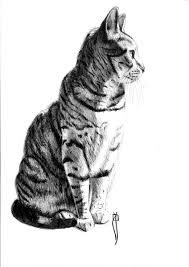 imagenes a lapiz de gatos imágenes de gatos hecho a lápiz para descargar imagen de gatos
