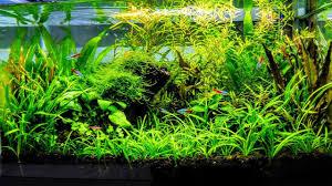 Aquascaping Plants How To Aquascape A Low Tech Planted Aquarium Part 1 Youtube