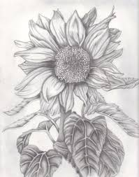 sunflower pencil drawing how to draw and sketch a sunflower using