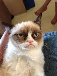 Frown Cat Meme - about grumpy cat